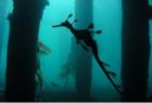 Seahorse-Sml