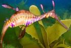 Seahorse1-Sml