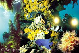 SeapicsReefs-Sml